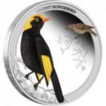 2013澳洲雀鳥園丁鳥精制銀幣