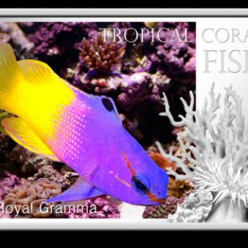 2013熱帶珊瑚魚鬼王魚精鑄銀幣