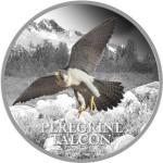 peregrine_falcon_web_res_reverse