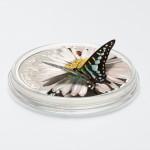 27146_Mariposas Exoticas 3D - Graphium Policenes_s1