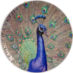 27469_Magnificent Life 2015 - Peacock ag_r